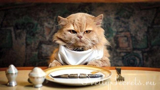 10 видов человеческой еды, которую нельзя давать кошкам