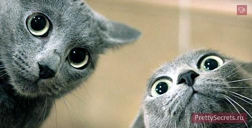 Два кота в одной квартире: как их подружить?