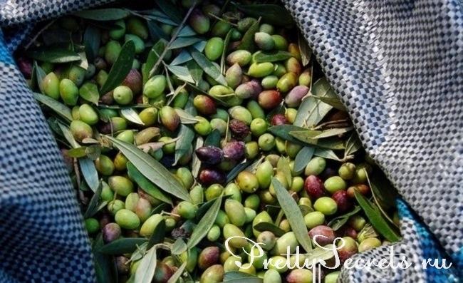 Почему полезно есть оливки