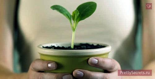 Влияние комнатных растений на организм человека